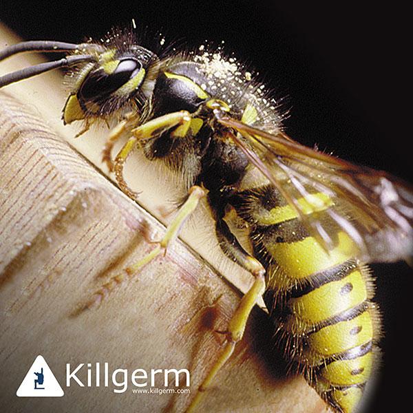 Pest Control Cambridgeshire cockroach flea wasp wisbech march pest